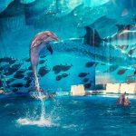 Barcelona for Kids acuario de barcelona